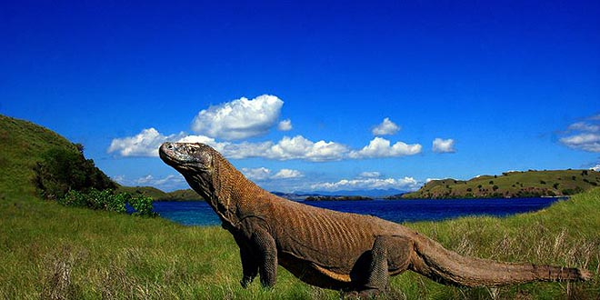Click to enlarge image Pulau-Komodo-2.jpg