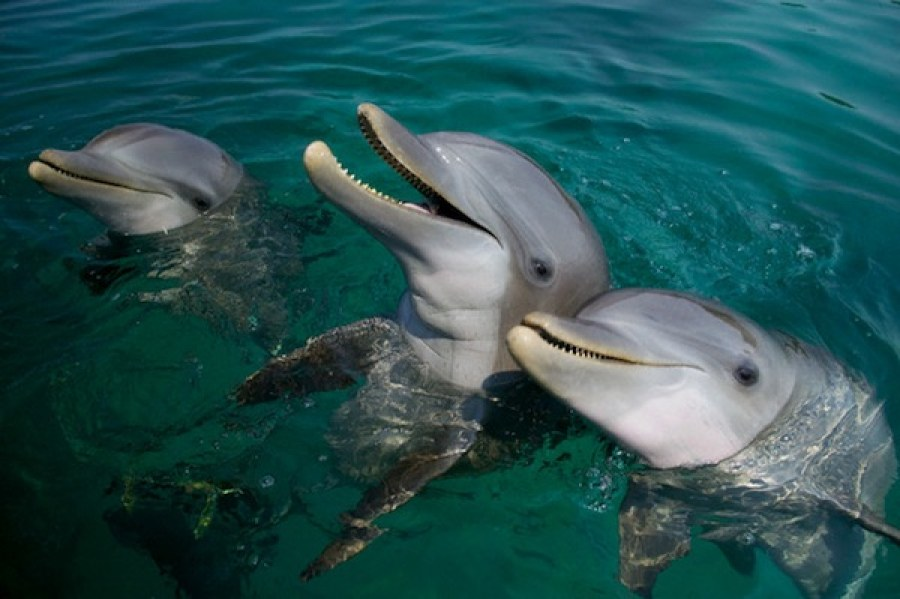 990+ Gambar Binatang Mamalia Laut Gratis Terbaru