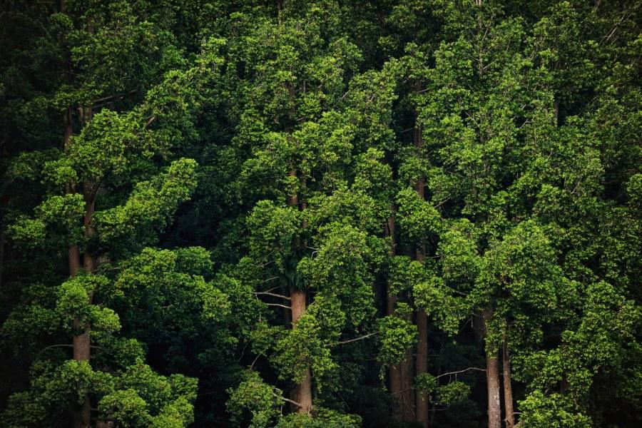 Pentingnya Melestarikan Hutan