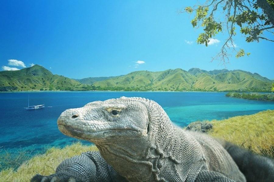 objek wisata nusa tenggara, pulau komodo