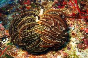 Perhatian Jenis Hewan Laut Ini Berbahaya Dan Patut Kalian Waspadai